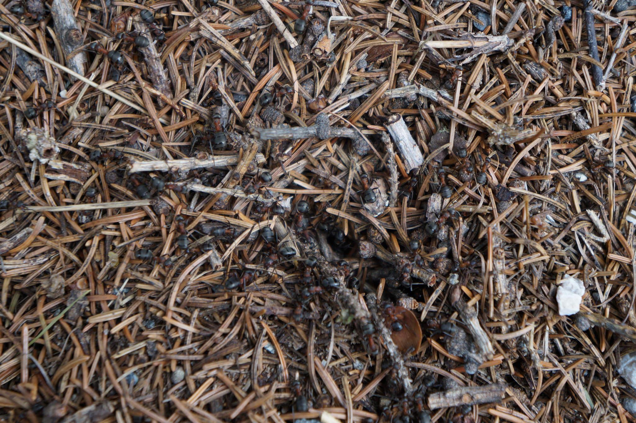 Il mondo delle formiche 2 – L'eusocialità